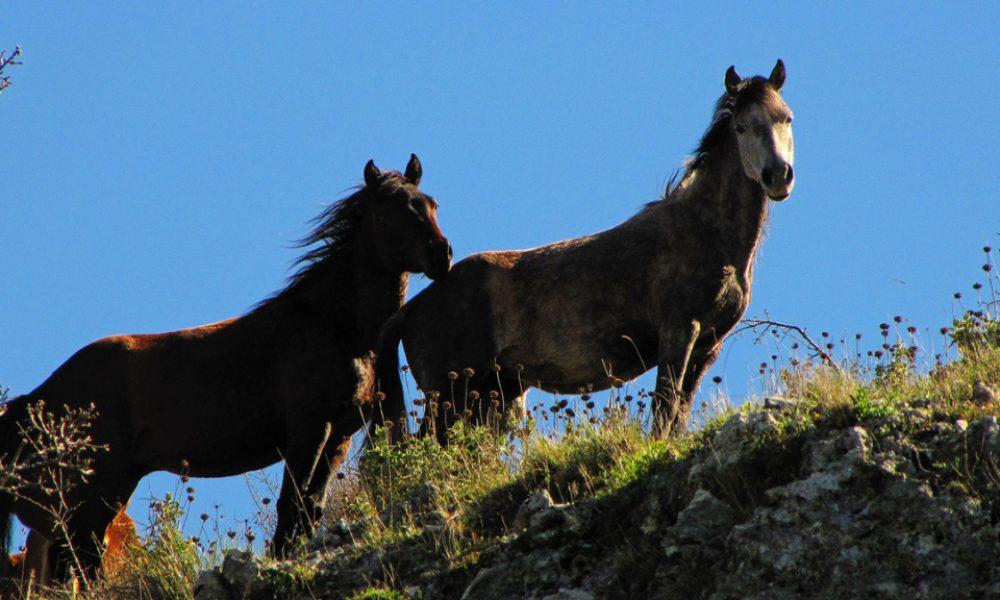 Όρος Φαρμακοβούνι Φιλιάτες – Ελεύθερα Άλογα